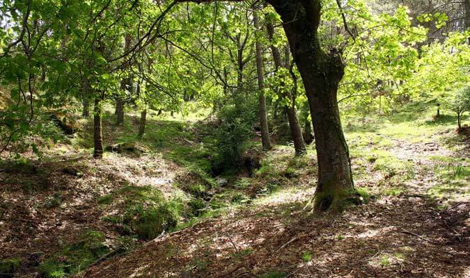Baño de bosque en Vigo
