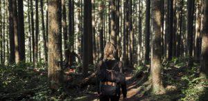 Baño de bosque o Shinrin-yoku