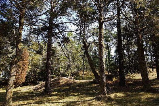 monte aloia Baño de bosque