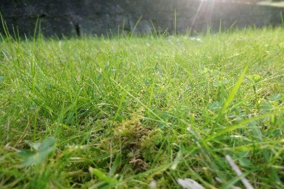 monte aloia-hierba