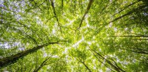 llamada bosque